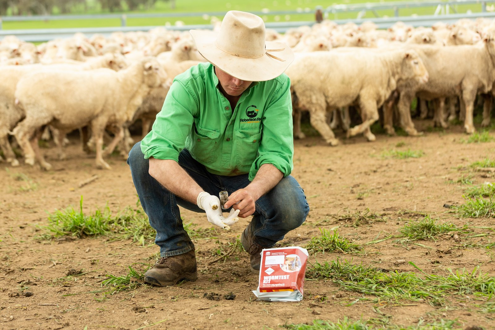 Farmer collecting sheep droppings for a worm egg count