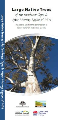 Large native trees of the southwest slopes and upper Murray region of NSW
