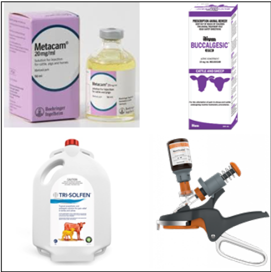 Pain relief products for lamb-marking and mulesing