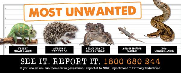 Report pest animals