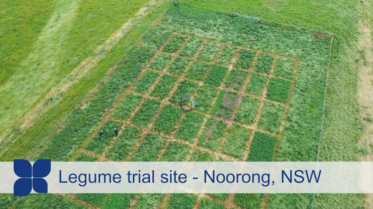 Aerial shot of legume trial site at Noorong, NSW
