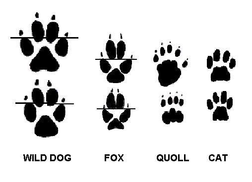 Pest Animal Footprints