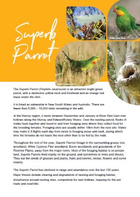 Superb Parrot Factsheet