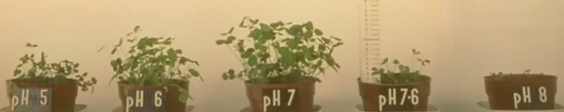 Photo showing plants being grown in soil with different pH levels