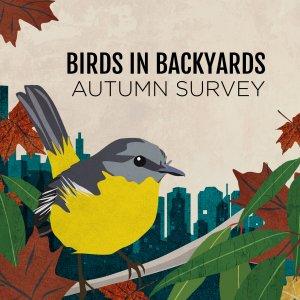 Backyard bird count graphic - birds in trees