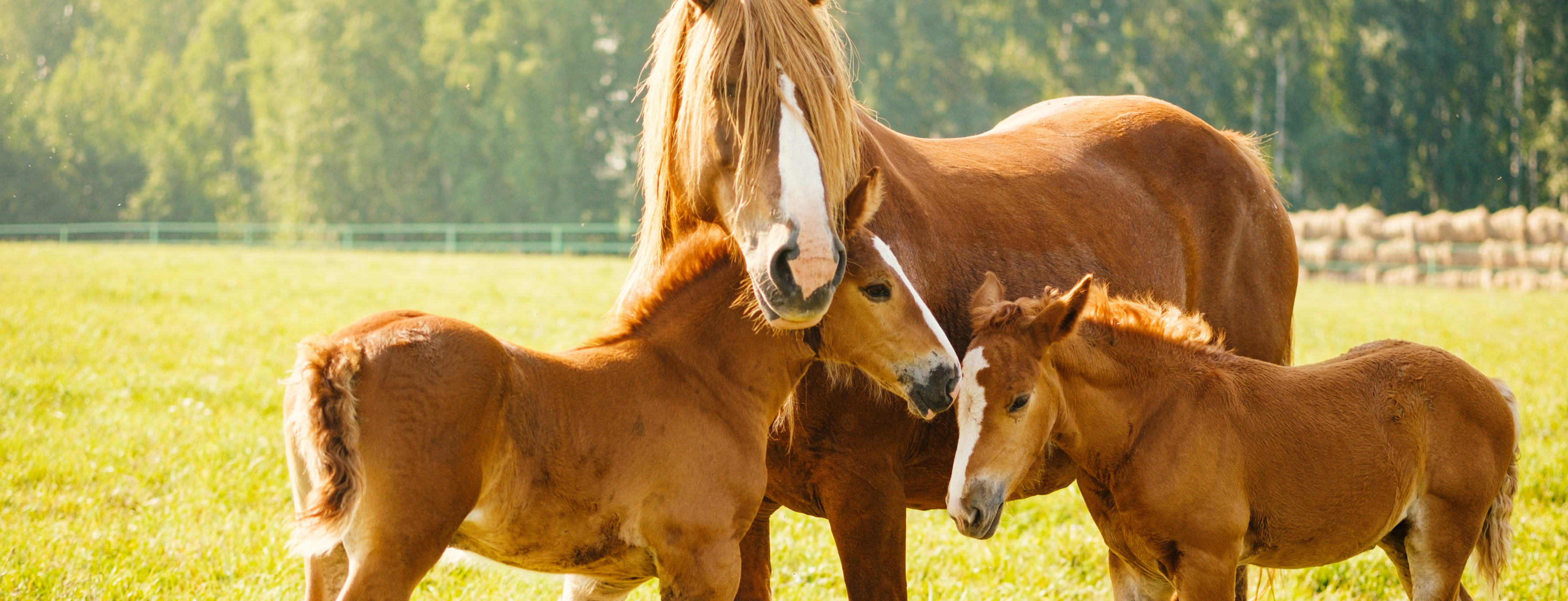 Every Bit Counts Small Landholders horses