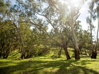 Grassy Woodlands