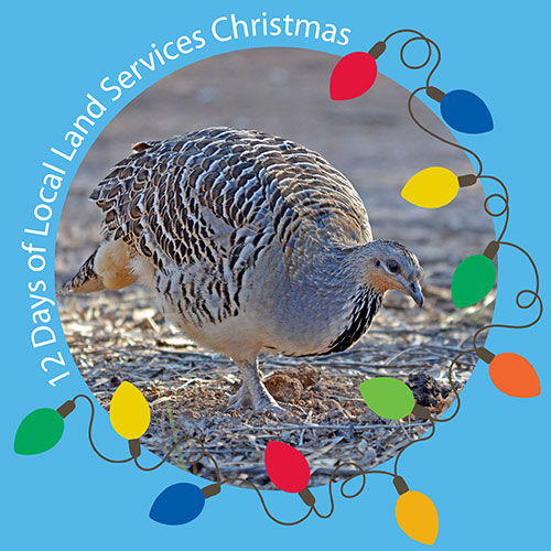 Day three - Malleefowl