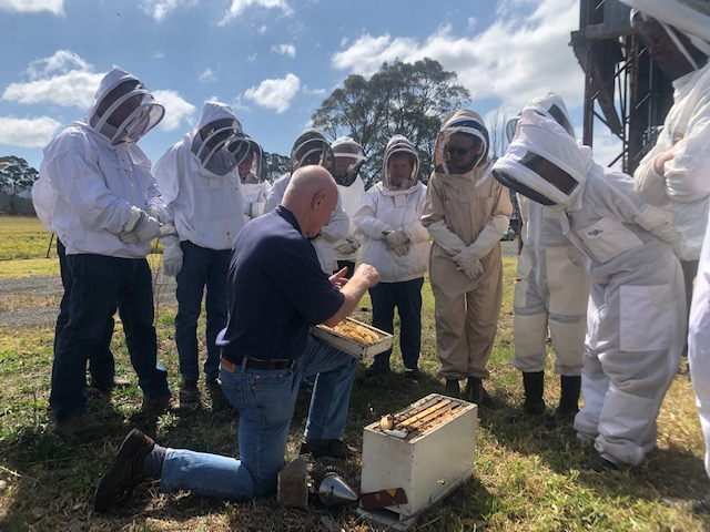 Inspecting the hives