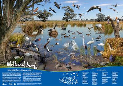 wetland birds on the NSW Murray-Riverina regions