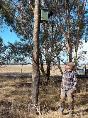 Trevor Barber looking up at a nest box