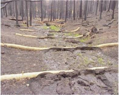Coir logs installed in a fire affected area