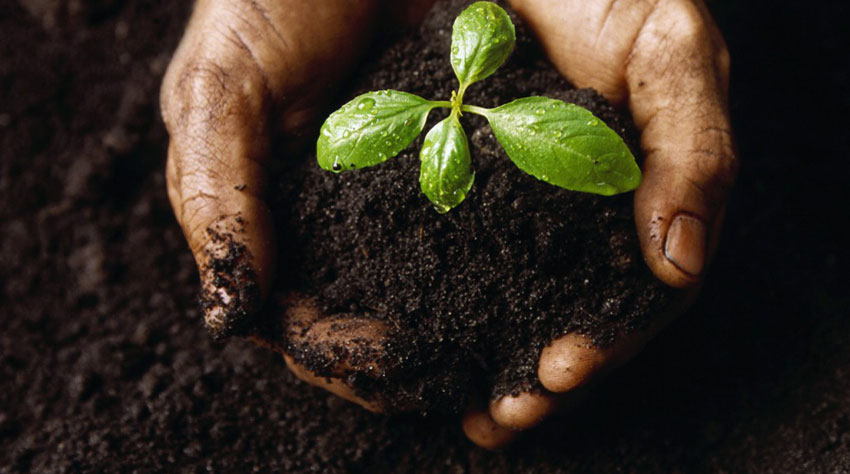 Hands and Soil